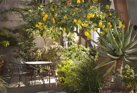 Zitronenbaum in mediteranem Topfgarten, Foto (C) liz west / flickr