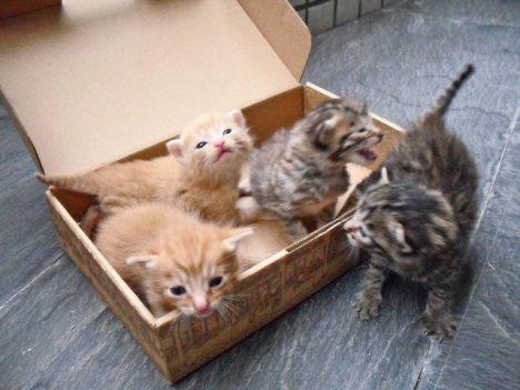Katzen liebe leere Kartons! Foto (C) Mr Thinktank / flickr