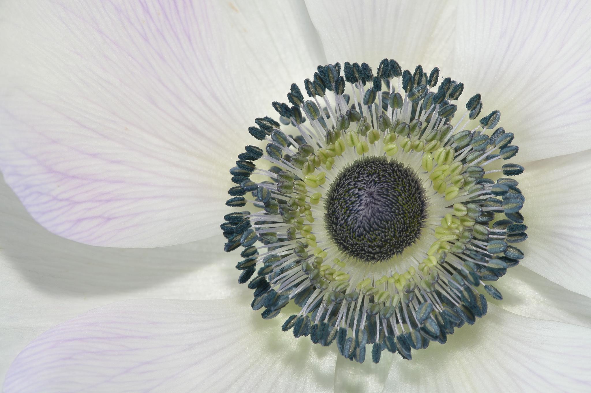 Die Natur ist einfach und komplex zugleich. Foto (C) Rick Ligthelm / flickr