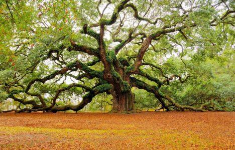Uralter drehwüchsiger Baum in Afrika, Foto (C) Marvin Foushe / flickr