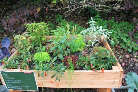 Auch ein Gemüsegarten kann eine Form des Widerstandes sein. Foto (C) Jennifer C. / flickr