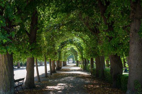Die Planung von Stadt-Wäldern und Alleen setzt verantwortungsvolles Denken für jahrhundertelange Zeiträume voraus. Foto (C) Beni Arnold / flickr