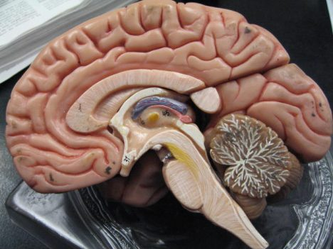 Fötus-Zellen im Gehirn der Mutter sind keine Seltenheit. Foto (C) GreenFlames09 / flickr