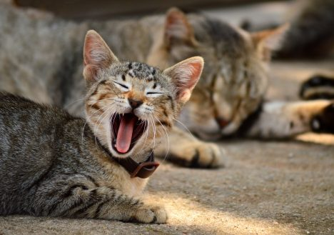 """Auch """"Tiger"""" lieben den Müßiggang, Foto (C) Marina del Castell / flickr"""