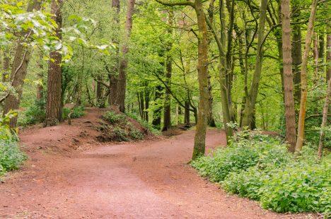Freizeitwald mit Waldweg Foto (C) Filip Stepien / flickr