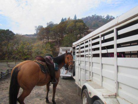 Weidewald für Pferde, Foto (C) Bureau of Land Management Orgenon and ... / flickr