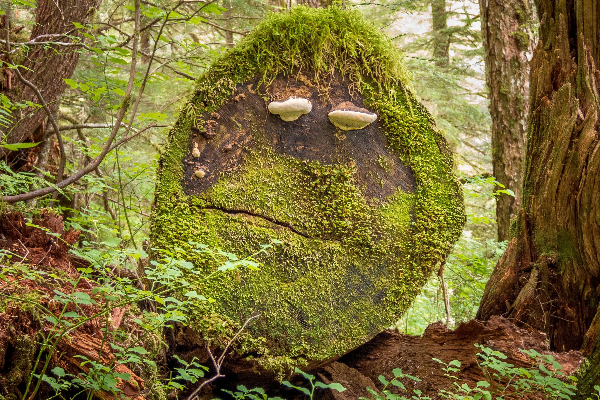 Im Wald kann man mit 3.000 negativen Ionen rechnen pro cm2 - im Gegensatz zu 150 in Innenräumen , Foto (C) Lee Coursey / flickr