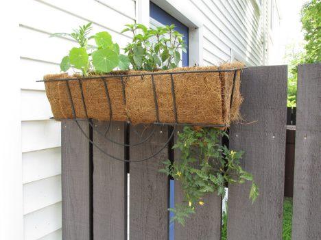 h ngende tomaten pflanzen ideal f r den balkon. Black Bedroom Furniture Sets. Home Design Ideas