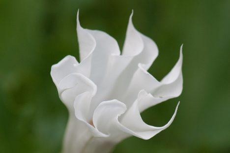 Wirbelform in der Pflanzenwelt, Foto (C) Thomas Quine / flickr