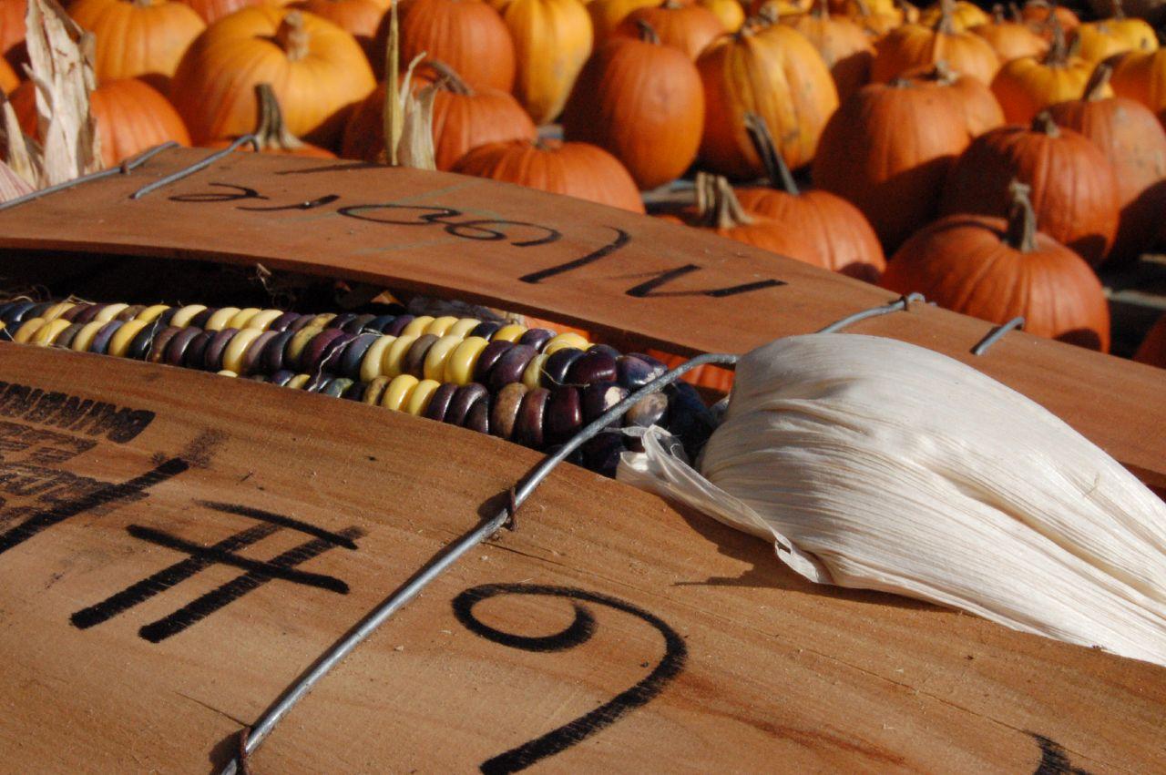 Kürbisse und Maiskolben halten besser ohne Plastik. Foto (C) Holly / flickr