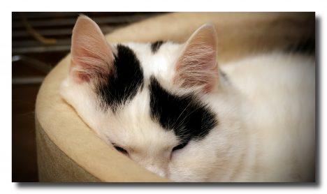 Leider sind vor allem Haustierbesitzer betroffen. Foto (C) Mark Turnauckas / flickr