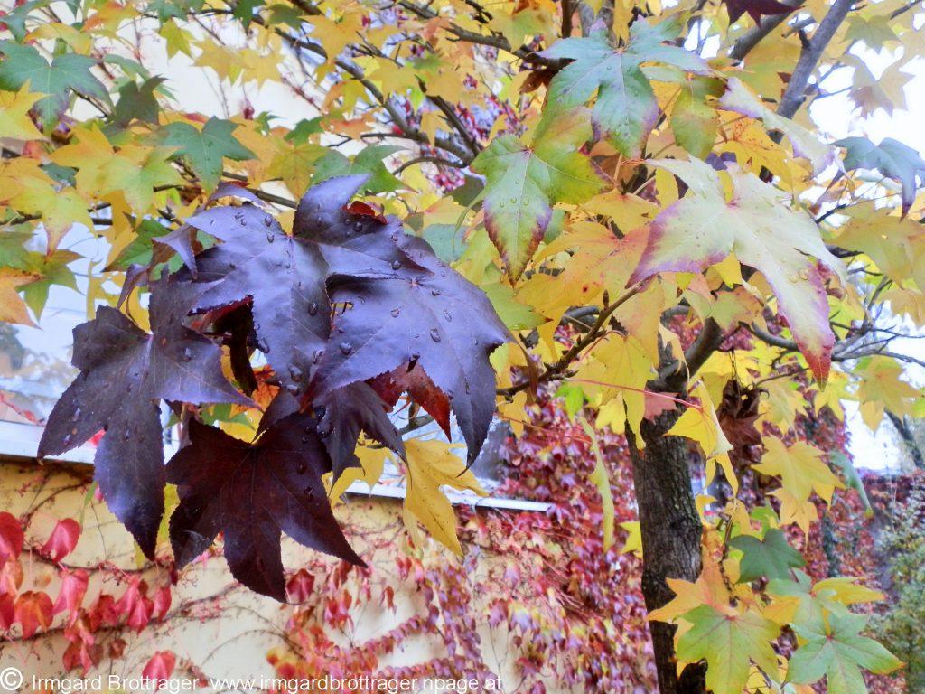 Wenn das bisherige Leben aus den Pflanzen zurückweicht, ändert sich das Informationsfeld. Foto (C) Irmgard Brottrager