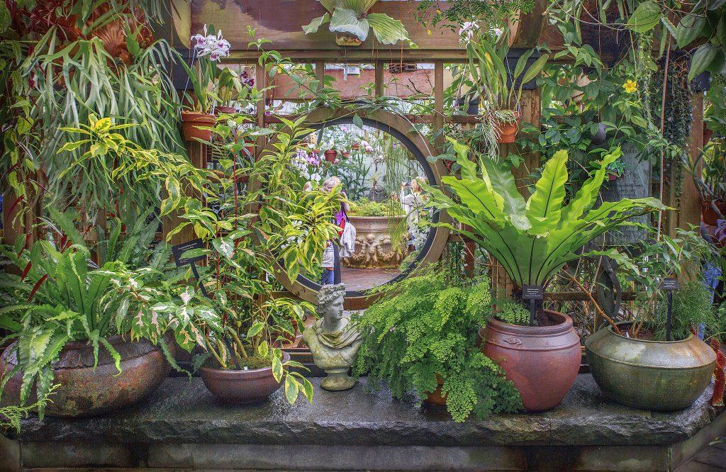Pflanzen und unsere natürliche Umgebung gehören zu den wichtigsten gestalterischen Elementen im Feng Shui.