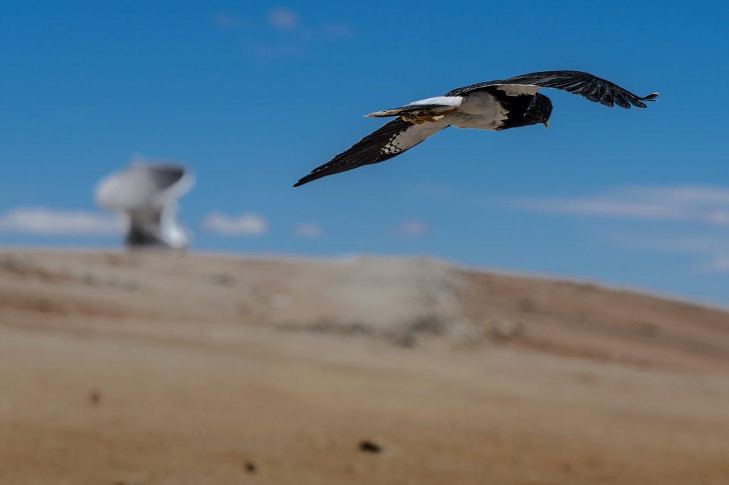 Viele Tiere sind sind nicht nur wetterfühlig, sondern wittern auch Gefahren. Foto (C) Allessandro Caproni / flickr CC BY 2.0