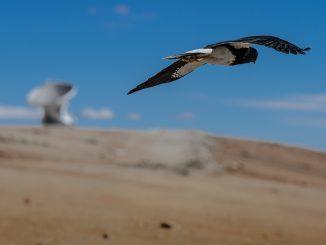 Viele Tiere sind sind nicht nur wetterfühling, sondern wittern auch Gefahren. Allessandro Caproni / flickr CC BY 2.0