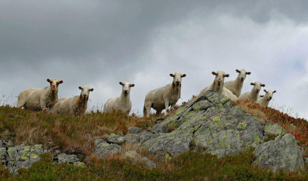 Der Weg vom willenlosen Schaf zum kreativen Schöpfergeist ist oft ein steiniger. Foto (C) Andrew / flickr CC BY 2.0