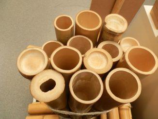 Bambusrohre mit verschiedenen Wandstärken.. Foto (C) Irmgard Brottrager