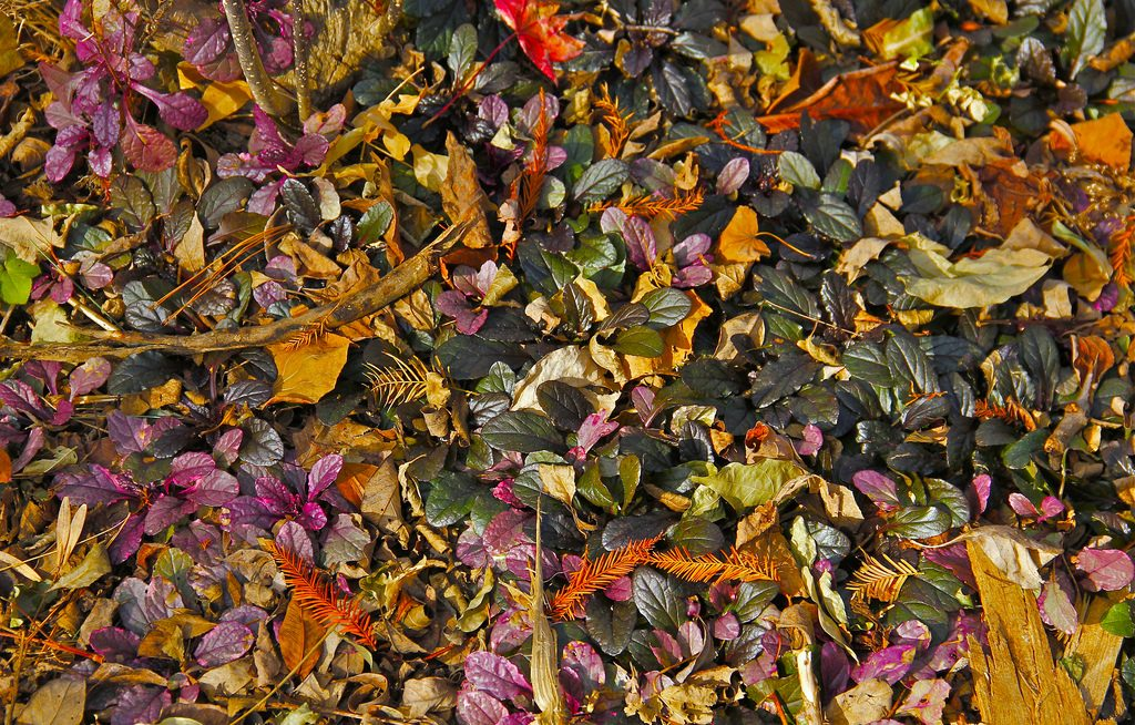 Potpourri mit Blättern, Foto (C) Chris Burke / flickr CC BY 2.0