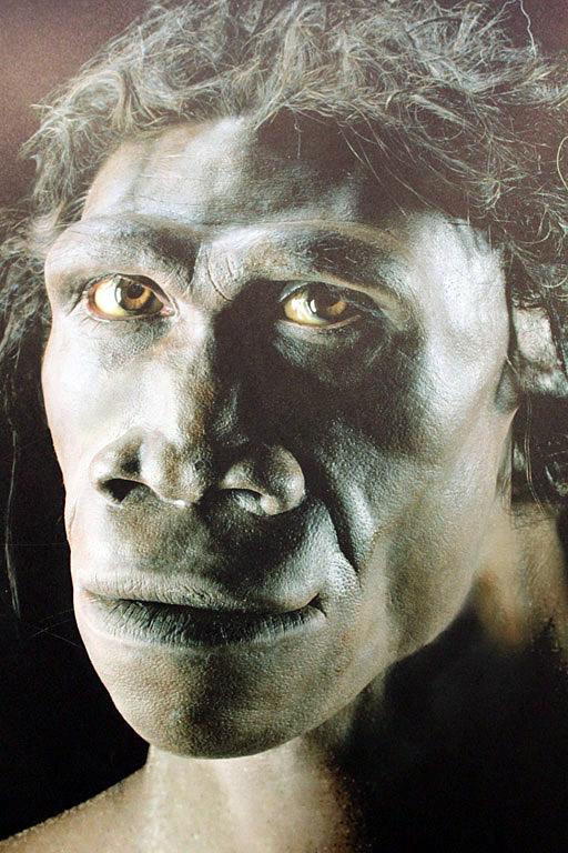 So soll ein Homo erectus ausgesehen haben. Foto (C) flowcomm / flickr CC BY 2.0
