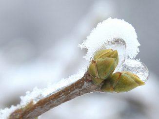 Knopse, Eis und Schnee. Foto (C) Maja Dumat / flickr CC BY 2.0