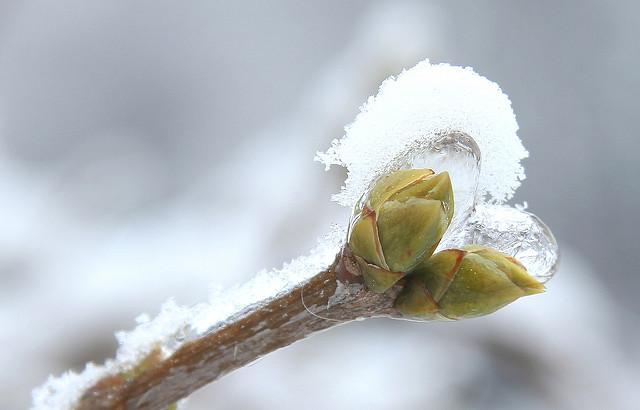 Knopsen, Eis und Schnee. Foto (C) Maja Dumat / flickr CC BY 2.0