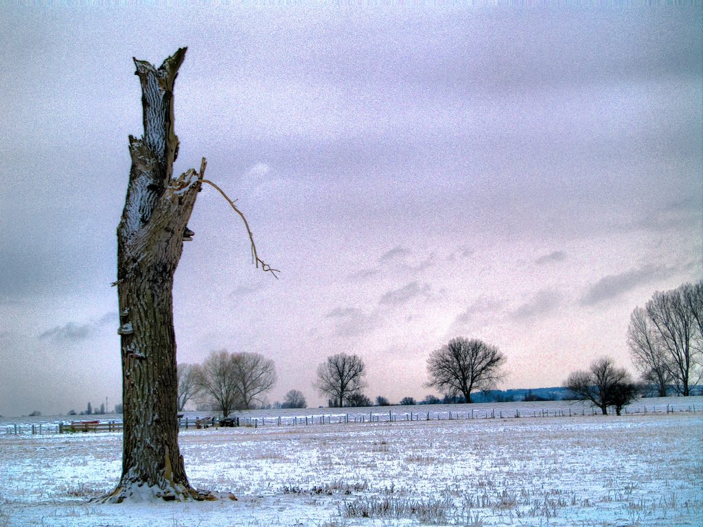 Winterlandschaft mit Baum-Gerippe, Foto (C) MIchael Gottwald / flickr CC BY 2.0