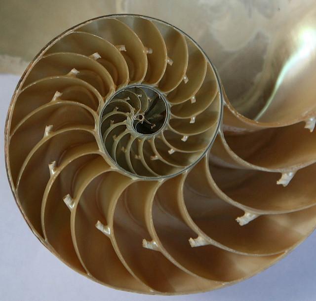Alles in der Natur folgt mathematischen Bauplänen. Foto (C) Jitze Couperus / flickr CC BY 2.0