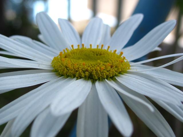 Die Natur zeigt uns den Unterschied zwischen natürlicher Harmonie und unnatürlicher Perfektion. Foto: Cleide Isabel / flickr CC BY 2.0