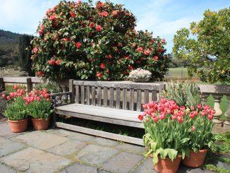 Eine großzügige Gartenbank, effektvoll inszeniert. Foto: ray_explores / flickr CC BY 2.0