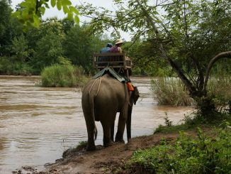 Artgerechte Haltung von Elefanten im Luang Prabang Elephant Park in Laos. Foto: Allie_Caulfield / flickr CC BY 2.0