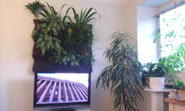 Hier hatte jemand eine gute Idee: Über dem Monitor ist eine kleine Greenwall platziert, die zusammen mit anderen Zimmerpflanzen für harmonische Schwingungen sorgt. Foto: mannewaar / flickr CC BY 2.0