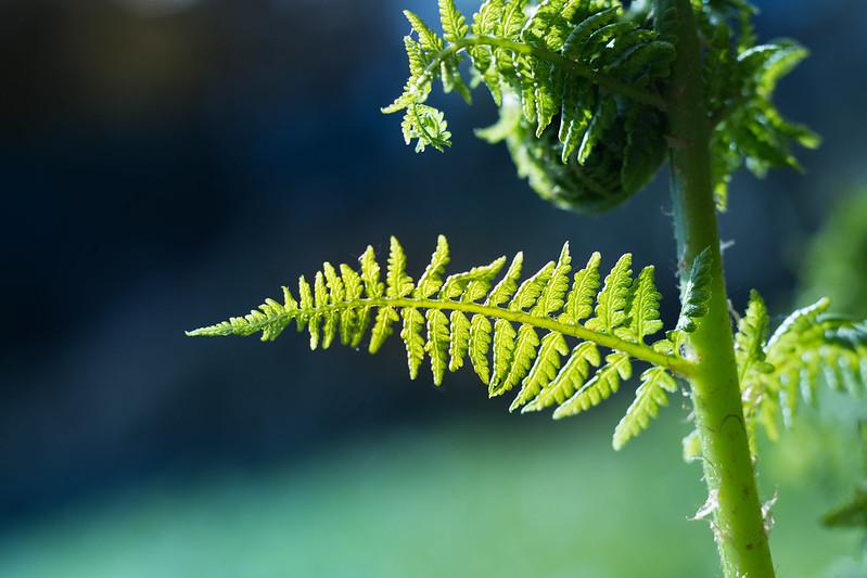 Pflanzen leben von Lichtnahrung, Foto: Theo Crazzolara / flickr CC BY 2.0