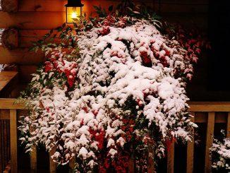Weihnachtliche Romantik im Einklang mit der Natur, Foto: Olin Gilbert / flickr CC BY 2.0