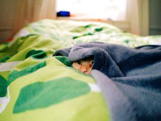 Hygienisch problematisch: Katzenhaare im Bett, Foto: Kārlis Dambrāns / flickr CC BY 2.0