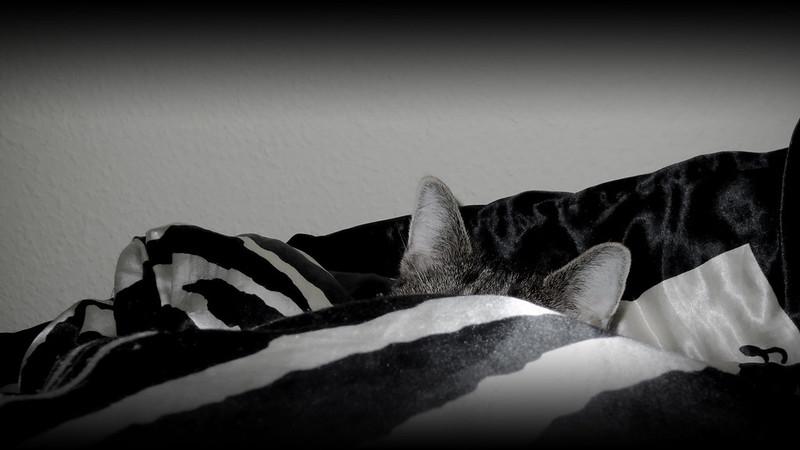 So sollte Bettwäsche eher nicht aussehen: Foto: J. Triepke / flickr CC BY 2.0