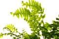 Energiepflanzen