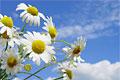 Heilpflanzen: Die Kraft der Natur