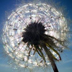Helles Licht und Strahlen symbolisieren Ruhm und Anerkennung